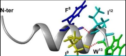 肽是分子量越小越好吗?肽的分子量多大效果最好?